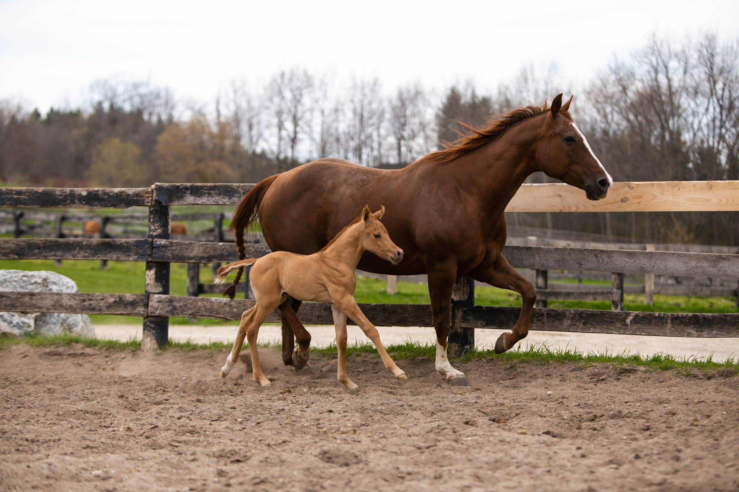 Shiraz and baby